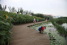 12-turenscape-houtan-park « Landscape Architecture Works | Landezine