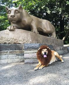 Nittany Lions come in all shapes and sizes...