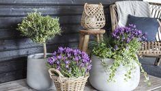 Blomster utepotter kan forvandle en grå og trist terrasse til en frodig blomsterrik oase. Hos Mester Grønn får du alt du trenger for å plante på terrassen.