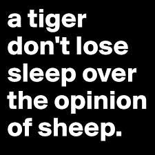 Tigers don't lose sleep over the opinions of sheep. In BOLD, just in case.