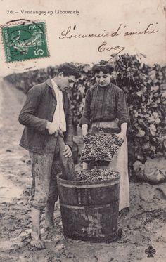 Vendange - carte postale de 1907 #Vinvinvin