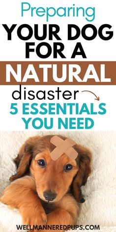 Emergency preparedness for dog owners: How to prepare your dog for a natural disaster (5 essentials you need). Emergency Preparedness, Survival, New Puppy, Natural Disasters, Dog Owners, Pet Care, Essentials, Puppies, Pets