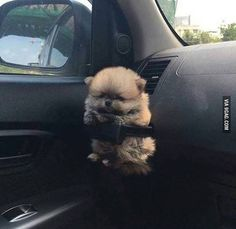 It's a pup holder. Follow @9gag @9gagmobile #9gag #puppy #instadogs #fluffy