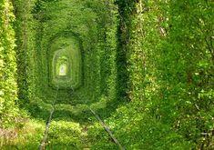 緑の木々に包まれたロマンティックな世界 ウクライナの「愛のトンネル」
