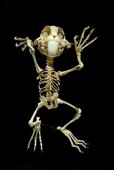 Skeleton of Bugs Bunny as created by artist Hyungkoo Lee