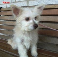Nemo is an adoptable Terrier Dog in Slidell, LA. Case