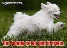 THE POODLE IS THE GOD OF FROLIC