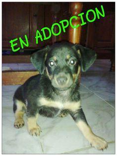 Hembrita adoptada!