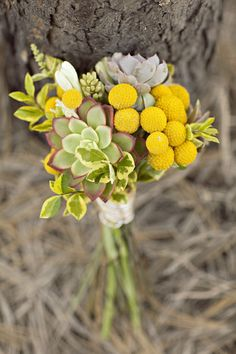 succulent and billy button bouquet.
