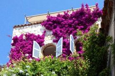 Bougainvillea covered house in France france flowers purple house garden cover design exterior design