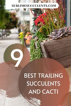 Here are the best trailing succulents and cacti to add on your collection. Find it all on this pin! #succulents #indoorgardening #outdoorgardening #gardeningtips #cacti Succulent Planter Diy, Succulent Care, Flowering Succulents, Cacti And Succulents, Succulent Species, Cactus Care, Epiphyte, Growing Seeds, Amazing Gardens