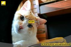 Valentina Gama Kiss  Nikon D3100  Loki  #YoSoyNikon #YoSoyCuriosidad