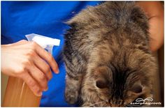 natural flea remedies for cats