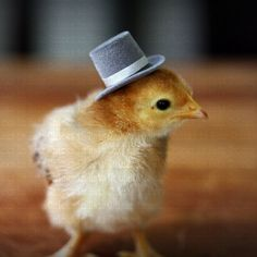 ☼ Seasons ☼ Spring ☼ Chicks in Hats Baby Chick in Jaunty Top Hat