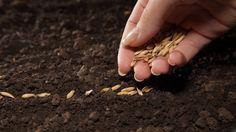 Como crear un #huerto en casa en solo 5 pasos | EcoSiglos #Agricultura