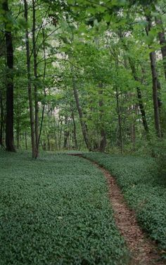 Hike the Appalachian Trail - hiked portions of it, would like to do it all