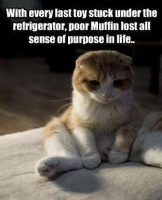 My cats are super spoiled.  I would rather spend my night looking for either ones toys, just so they won't go without.