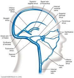 venous sinuses of the brain - Google Search