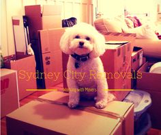 Sydney Cheap Removalists is a moving company that provides the best quality moving all over Sydney. And by best quality, we mean that you will be assisted by the best movers that are well trained in handling anything that is […] Cheap Movers, Best Movers, Moving Services, How To Remove, Teddy Bear, Animals, House, Ideas, Animales