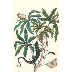 """Buyenlarge 'Peacock Butterfly with A Lizard' by Maria Sibylla Merian Graphic Art Size: 30"""" H x 20"""" W x 1.5"""" D"""