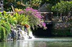 The Polynesian Cultural Center On Island Of Oahu Is Host To A Variety Beautiful Flowers And Waterfalls