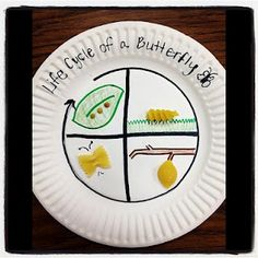 This project would be a great way to use art for teaching science. Students will use pasta shells to learn the life cycle of a butterfly. This project is very simple to do, and would be easy for young students to understand.
