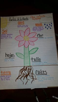 A Beautiful Garden is a Work of Heart Dual Language Classroom, Bilingual Classroom, Bilingual Education, Classroom Themes, Kindergarten Schedule, Kindergarten Anchor Charts, Spanish Anchor Charts, How I Take Notes, Plant Lessons