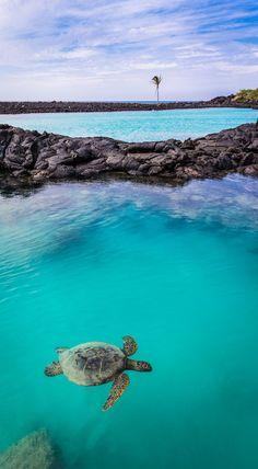Kiholo Bay, Kona Coast, Hawaii | Brook Rushton Photography