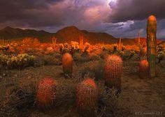 Sonoran glow: Mcdowell mountains, Arizona, USA