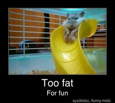 Hamsters are amazing-we all know that.But some hamsters are so cute you can't stand even looking at them.You just want to squeeze them until they just explode . Funny Cute, Haha Funny, Hilarious, Funny Memes, Funny Stuff, Silly Jokes, Super Funny, Fat Memes, Memes Humor