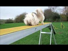 Finley - Dogs Trust