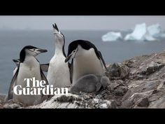The long read: Not long after Antarctica recorded some of its highest-ever temperatures, I joined a group of scientists studying how human activity is transforming the continent. It wasn't what we saw that was most astonishing – it was what we heard