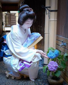 June 2017: geiko Toshisumi with hydrangeas by h.ishibashi1001 on Instagram ༼ つ ◕◡◕ ༽つ Geisha-kai on P a t r e o n    Instagram