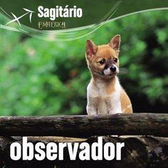 """""""#Sagitário #signos #zodíaco ♐"""""""