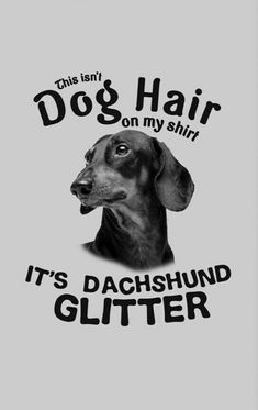 Astonishing advised dog lovers browse this site funny dachshund, white dachshund, tiny puppy breeds Dachshund Funny, Mini Dachshund, Dachshund Puppies, Daschund, Dachshund Quotes, Dapple Dachshund, Dachshund Gifts, Weenie Dogs, Doggies