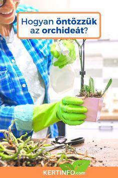 Herbs, Vegetables, Food, Essen, Herb, Vegetable Recipes, Meals, Yemek, Veggies