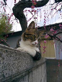 :-) http://nekomemo22.blog99.fc2.com/blog-entry-4251.html