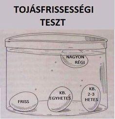 Tojásfrisseségi teszt