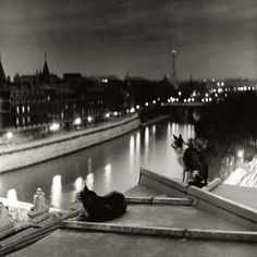 Robert Doisneau, Paris Cats at Night