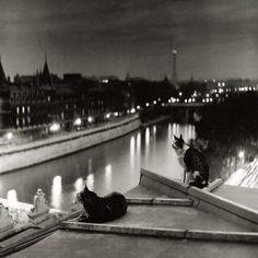 Robert Doisneau, Paris Cats at Night