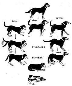 Entender a tu mascota
