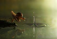 """Snail and the Raindrop"" - Vadim Trunov"