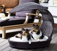 pampered and spoiled dogs :)