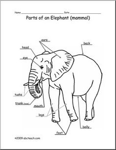 Animal Diagram: Elephant (labeled and unlabeled) 1st Grade Science, Zoology, Anchor Charts, Animal Kingdom, Mammals, Diagram, Fourth Grade, Elephants, Book
