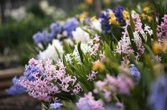 50 Flowers You Should Have in Your Garden