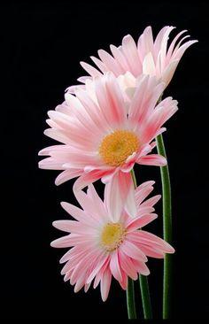 Pink flowers pretty
