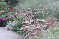 Bee Garden, Plants, Flowers Nature, Dream Garden, Cottage Garden Plants, Garden Landscape Design, Prairie Garden, Naturalistic Garden, Natural Garden