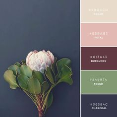 Build Your Brand: 20 Unique and Memorable Color Palettes to Inspire You – Design School deco color palette inspiration 20 unique and memorable brand color palettes to inspire you – Learn Palettes Color, Colour Pallette, Burgundy Colour Palette, Rustic Color Palettes, Gold Colour, Sky Colour, Cream Colour, Green Colour Palette, Bedroom Color Palettes