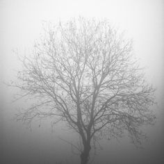 Mist by S719, via Flickr  Tree covered by mist.