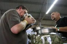 A medical marijuana user smells a jar of marijuana at the medical marijuana farmers market at the California Heritage Market in Los Angeles, California July 11, 2014.  REUTERS/David McNew/File Photo